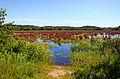 Great Meadows National Wildlife Refuge 2008-08-17.jpg