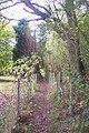Greensand Way near Carter's Hill - geograph.org.uk - 1533138.jpg