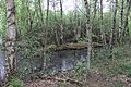 Grosses Torfmoor Wald O01.jpg