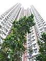 HK Chai Wan Hing Wah (I) Estate 05 facades n tree Sept-2012.JPG