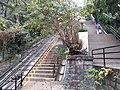 HK ML 半山區 Mid-levels 梅道 May Road peak tram rail February 2020 SS2 01.jpg