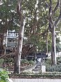 HK SW 上環 Sheung Wan 卜公花園 Blake Garden flora 喬木樹 trees April 2020 SS2 03.jpg