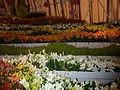 Haifa International Flower Exhibition P1130913.JPG