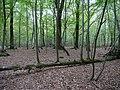 Hambach forest 04.jpg