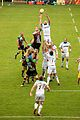 Harlequins vs Glasgow Warriors (3).jpg