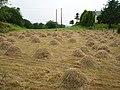 Haymaking, Cloonee-Cluan I - geograph.org.uk - 289487.jpg