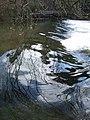 Head Weir, River Exe - geograph.org.uk - 372390.jpg