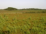 File:Heathland around Stephill Bottom, New Forest - geograph.org.uk - 28335.jpg
