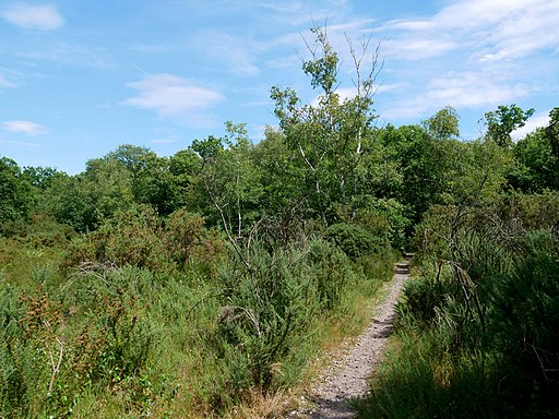 Heathland on the Eastern Side of Bostall Woods