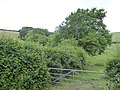 Hedge and Milltown Wood (geograph 5816604).jpg