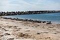 Helgoland-Düne - panoramio - L-BBE (7).jpg