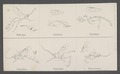 Hellwigia - Print - Iconographia Zoologica - Special Collections University of Amsterdam - UBAINV0274 046 02 0012.tif