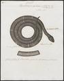 Herpetodryas getulus - 1700-1880 - Print - Iconographia Zoologica - Special Collections University of Amsterdam - UBA01 IZ12100309.tif