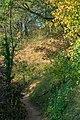 Hessigheim - Felsengärten - schmaler Pfad zwischen Büschen und Trockenwiese.jpg