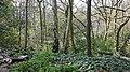 Highgate Wood 20170330 144730 (49400387183).jpg