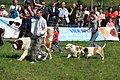 HiperParada animalelor la CORA (4551769109).jpg