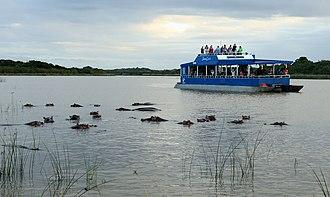 St Lucia, KwaZulu-Natal - Image: Hippopotamus and Hippo tour boat, i Simangaliso Wetland Park
