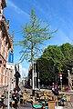 Hiroshima-boom op terras van café, Vijfsprong, Tilburg.JPG