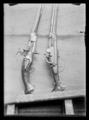 Hjullåspistol, Frankrike ca 1600 - Livrustkammaren - 62664.tif