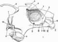 Holocephali skull structures.png