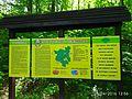 Holodny Yar forest 10.jpg