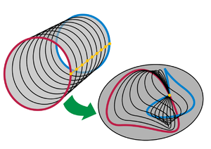 Homotopy groups of spheres - Homotopy of two circle maps keeping base point fixed