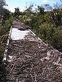 Hurricane Sandy damaged Cape May National Wildlife Refuge (NJ) (8165415409).jpg