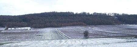 IMG Vignes à Saint-Denis-de-Vaux.JPG