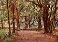 Ilex Avenue & Fountain in Villa Borghese by Alberto Pisa (1905).jpg