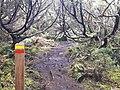 Ilha da Terceira (39038972714).jpg