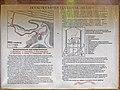 Information board in Gullmarsskogen ravine.jpg