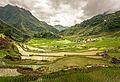 Inside the Batad rice terraces.jpg