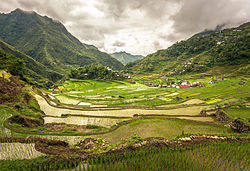 Inside the Batad rice terraces.jpg