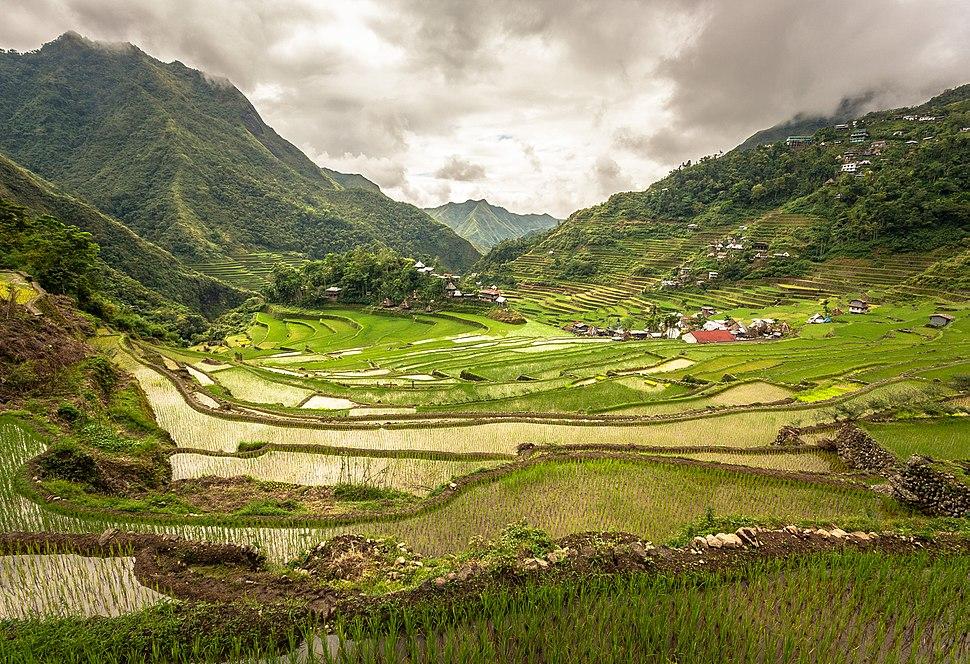Inside the Batad rice terraces