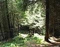 Into denser woodland - geograph.org.uk - 540357.jpg