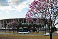 Ipê-roxo em Brasília 13.jpg