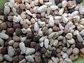 "Iran-qom-Cactus-The greenhouse of the thorn world گلخانه کاکتوس ""دنیای خار"" در روستای مبارک آباد قم- ایران 28.jpg"