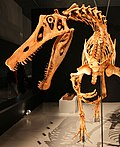 Reconstructed mount of Irritator