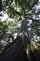 Jardim Botânico do Rio de Janeiro - 130715-6596-jikatu (9308688533).jpg
