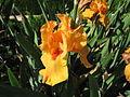 Jardin botanique Dijon 028.jpg