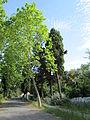 Jardines de la Cónsula 18.jpg