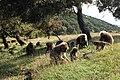 Jelada Monkeys I (24165216715).jpg