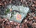 Jena 1999-01-10 11.jpg