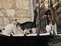 Jerusalem's Old City (4159333321).jpg
