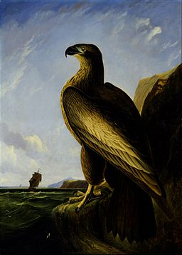 John James Audubon - Washington Sea Eagle - Google Art Project