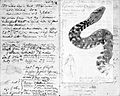 John Temperley Gray, drawing of scorpion claws and snake. Wellcome L0027455.jpg