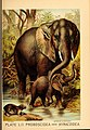 Johnson's household book of nature (Plate LII) (7268685688).jpg