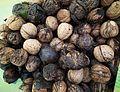 Juglans regia, Harvest nuts in Witkowo.JPG