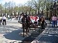 Kůň v Sankt-Petěrburgu (2).jpg