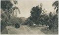 KITLV - 12621 - Kleingrothe, C.J. - Medan - Inspectors' house in Binjai - 1903.tif